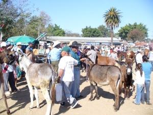 Zaachila animal market