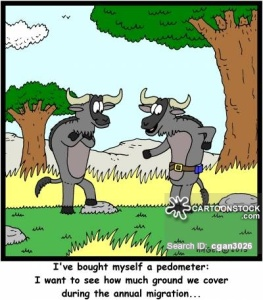 'I've bought myself a pedometer: I want to see how much ground we cover during the annual migration...'